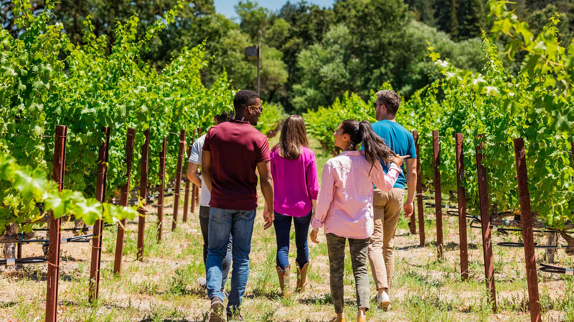 Twomey Visitors walking through the vineyard