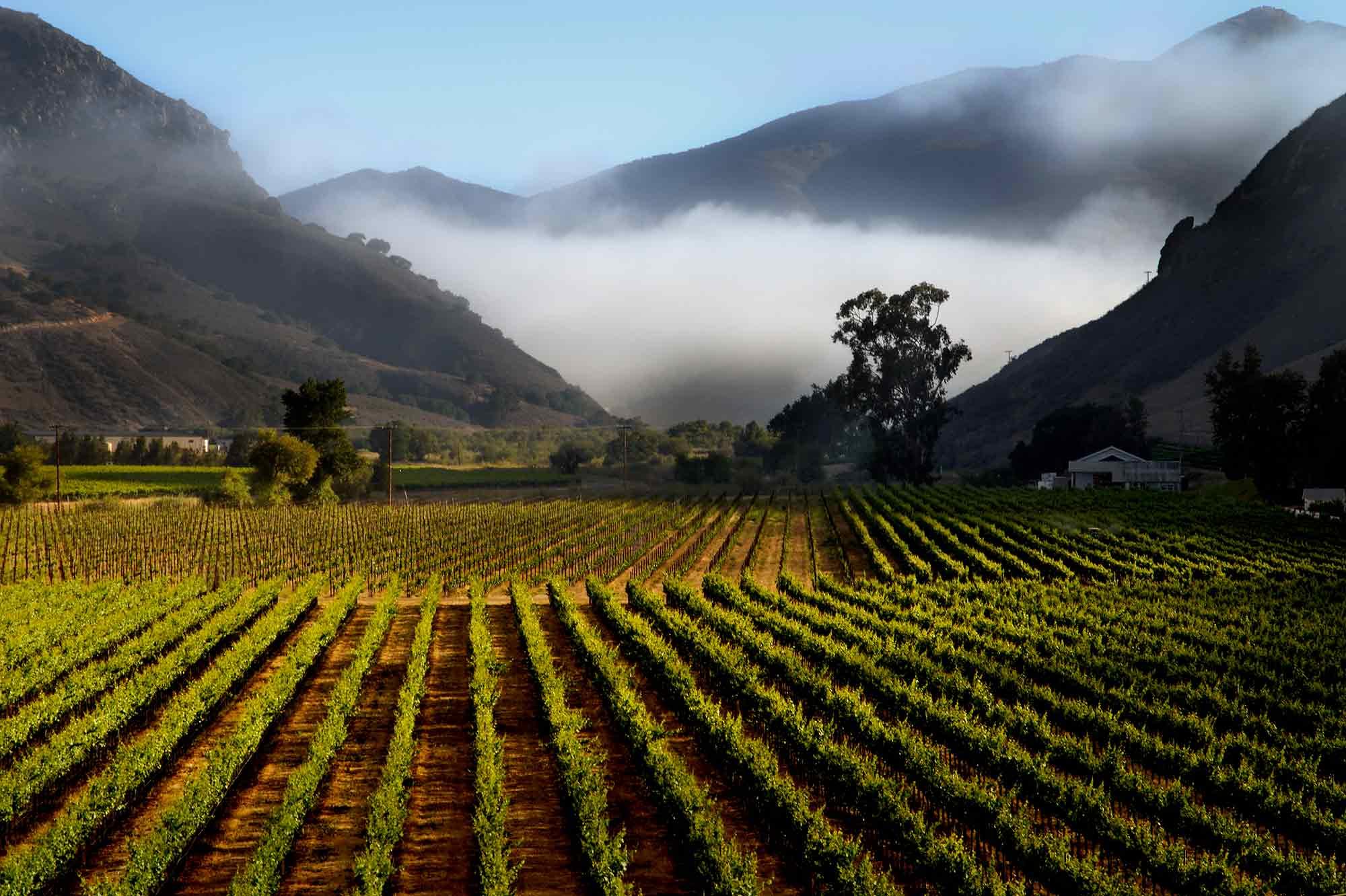 Scenic view of Bien Nacido Vineyard