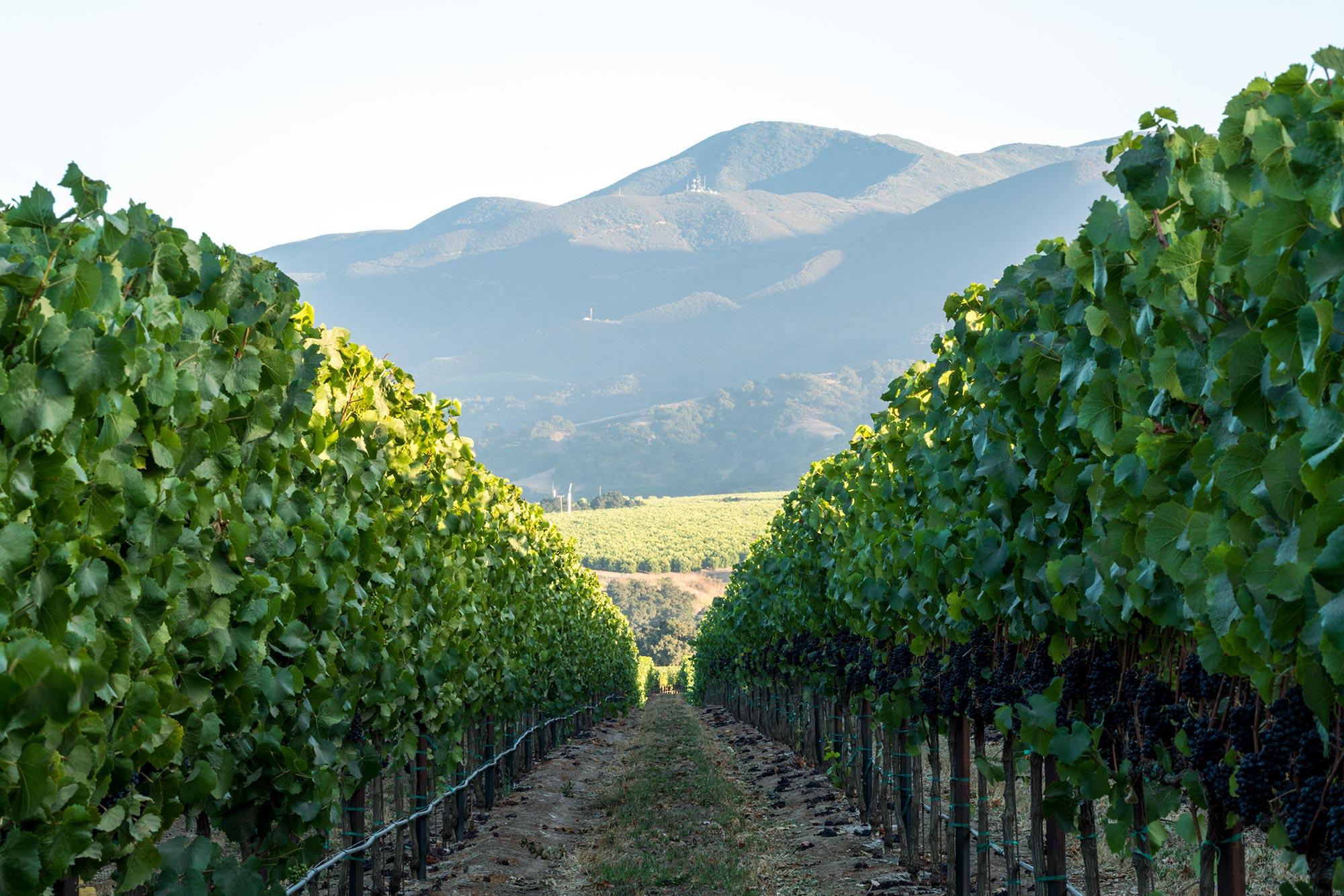 Scenic view of Garys' Vineyard