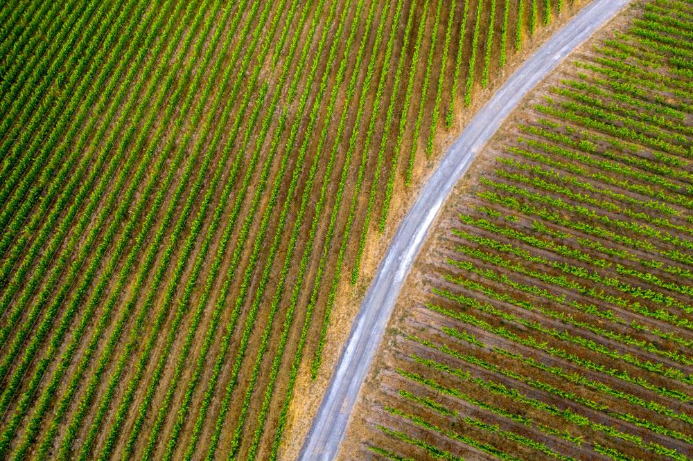 Vineyard rows at Last Stop