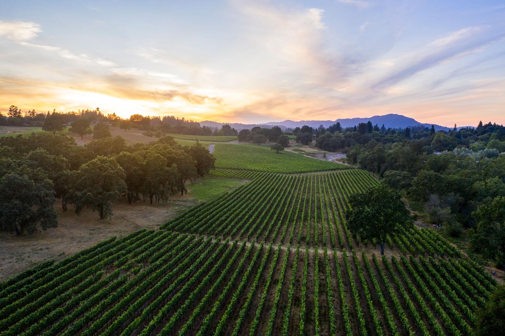 Scenic view of Last Stop Vineyard