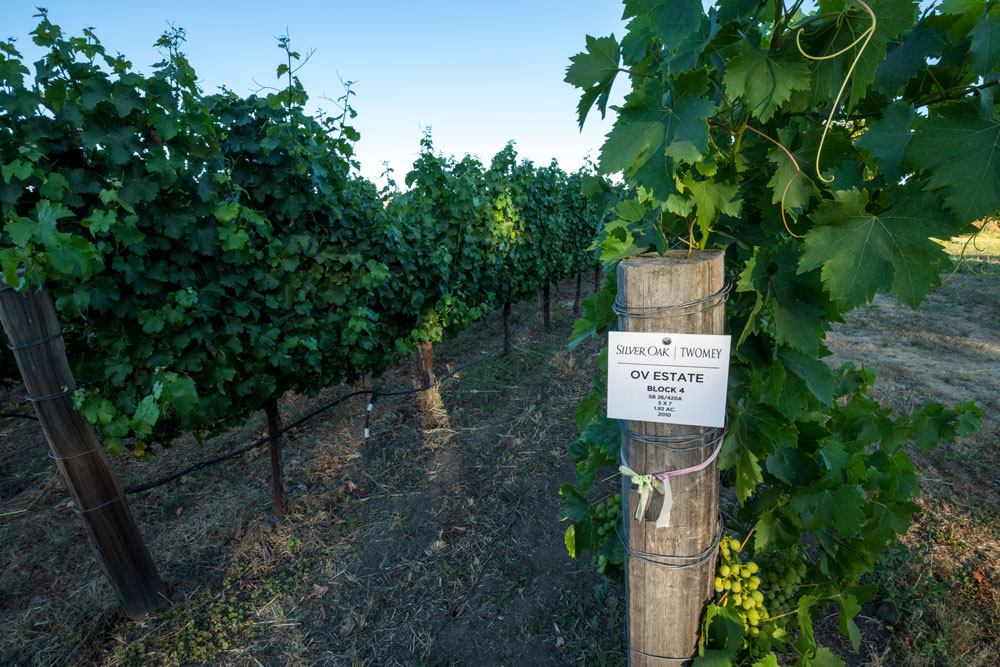 Vineyard block signage at Oakville Estate Vineyard