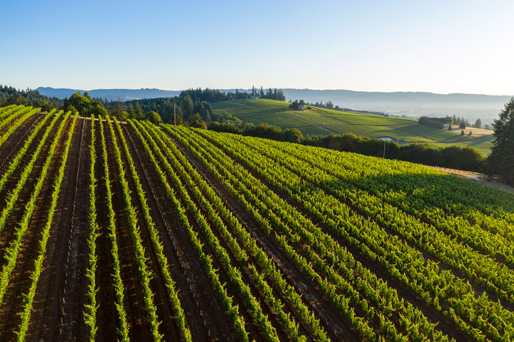 Prince Hill Vineyard in Dundee, OR