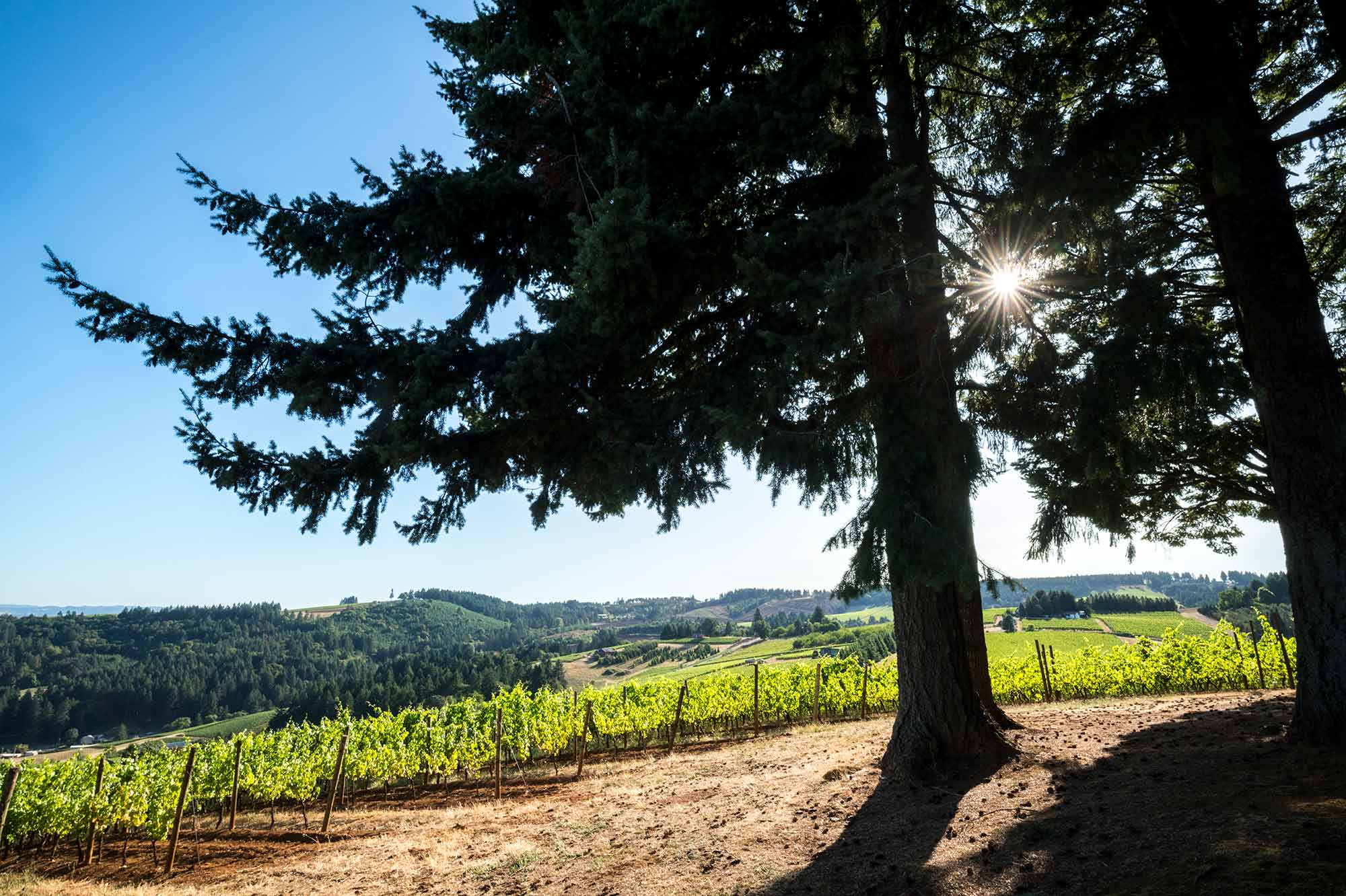 Scenic view of Prince Hill vineyard