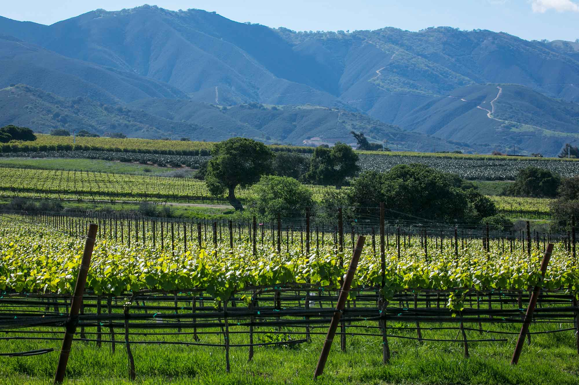Scenic view of Soberanes Pinot Noir vineyard