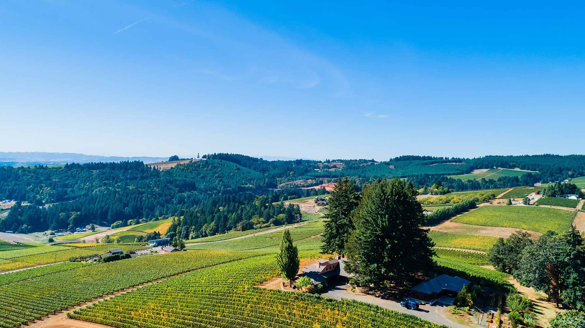 Twomey Dundee, Willamette Valley