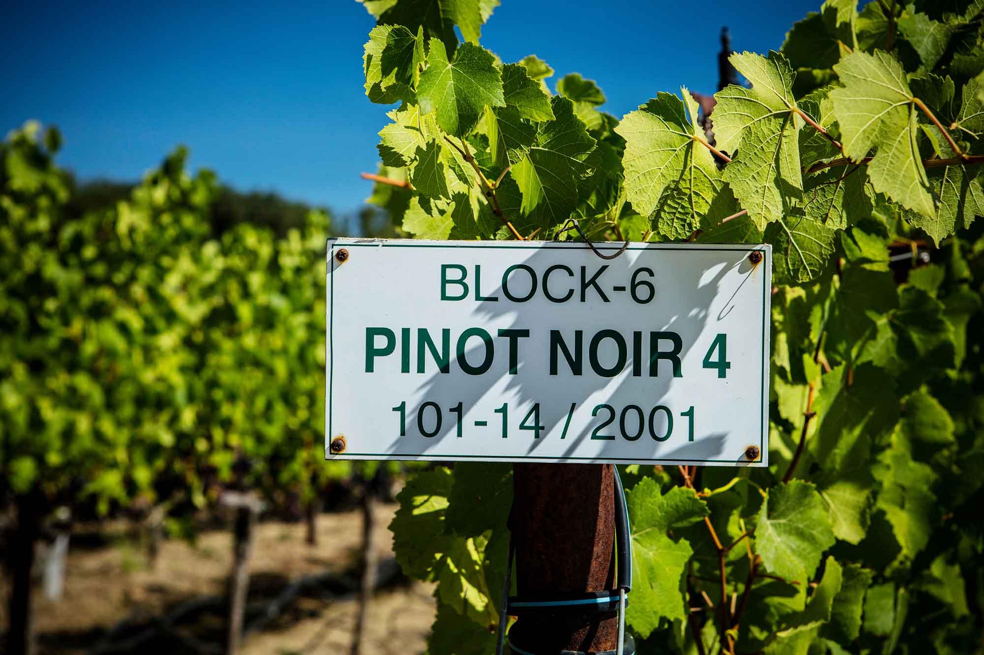 Pinot Noir block sign at Westpin Vineyard