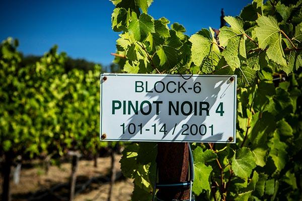 Westpin Vineyards, Pinot Noir block